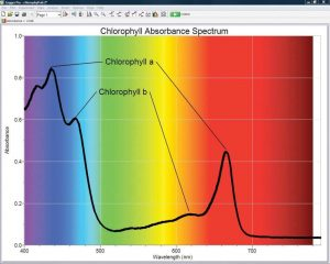 Chlorophyll absorbance spectrum