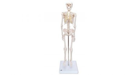 Mini Skeleton Mounted on Base