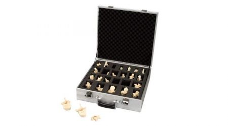 Set of 24 BONElike™ Vertebrae Models