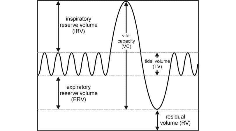 Spirometer lung Capacities